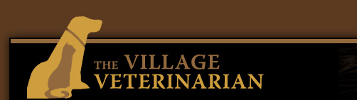The Village Veterinarian is committed to serving the Bangor, Pennsylvania area with exceptional, compassionate veterinary care